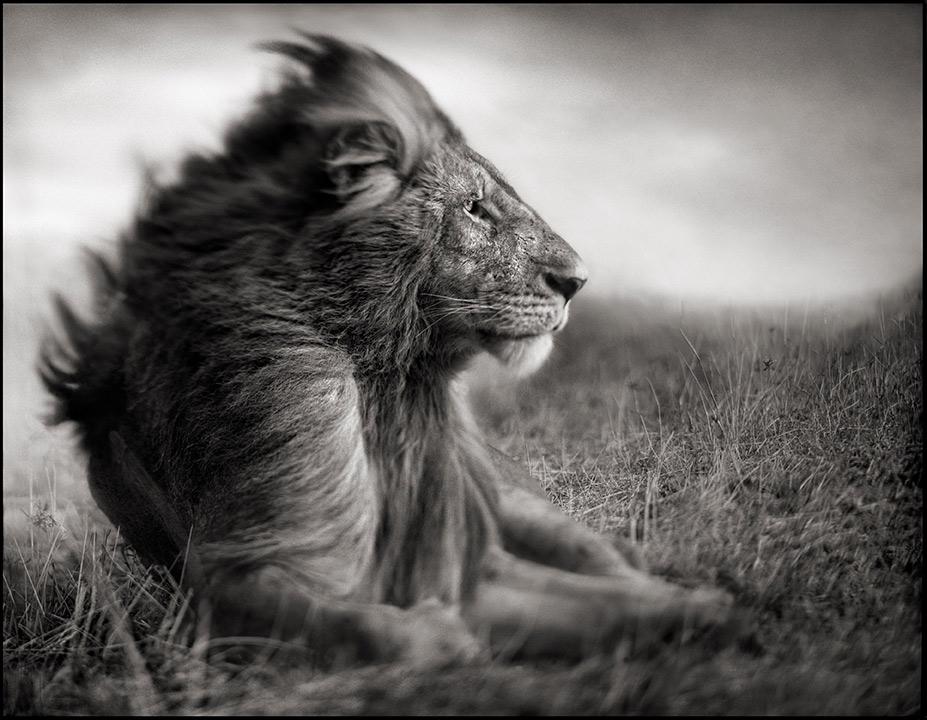 Nick Brandt: trollbindande afrikansk oro på Fotografiska
